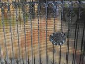 Забор ковка